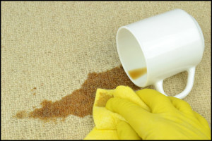 Coffee stain on carpet being cleaned.