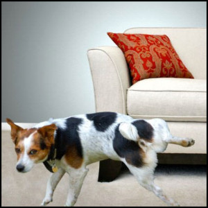 A family dog stains a sofa.